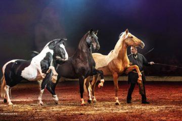 sieghart-reisen-cavalluna2